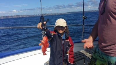 Good sized Red Rock Cod