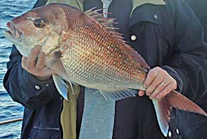 Yet another bloke with a snapper